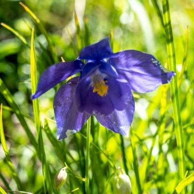 Herbier : les fleurs des Pyrénées